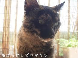 amebakkaside-くるっピー入荷♪