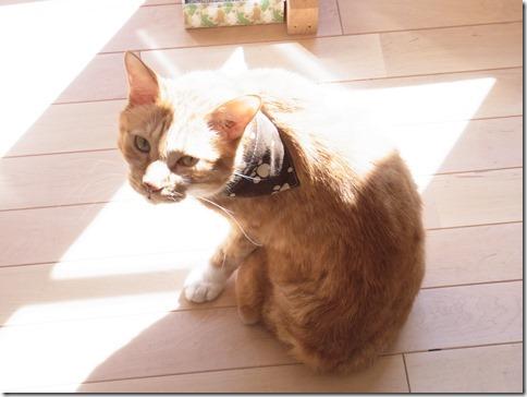 R0104859_thumb-猫だいすき★隊長