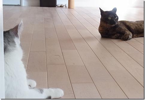 R0106092_thumb-猫だいすき★隊長