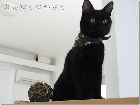 R0106236_thumb-猫だいすき★隊長