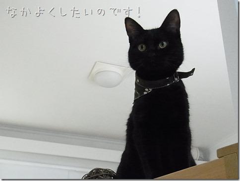 R01062391_thumb-猫だいすき★隊長