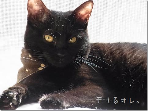 resize1151_thumb-猫だいすき★隊長