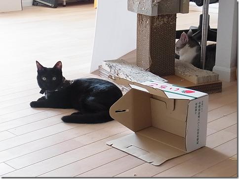 resize1158_thumb-猫だいすき★隊長