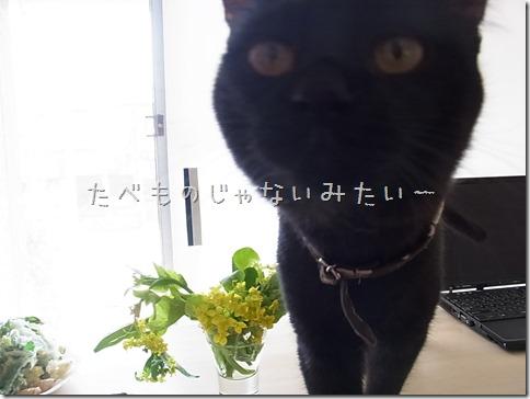 R0106328_thumb-菜の花隊長★