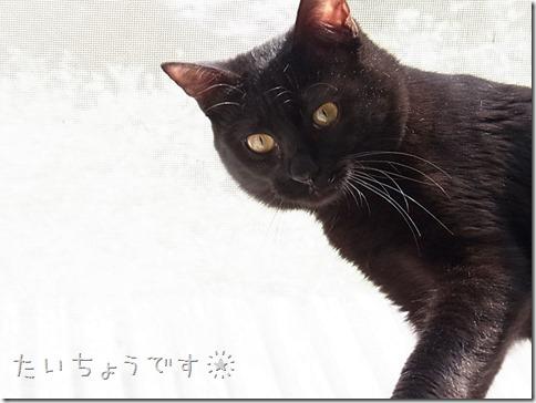 resize1306_thumb-隊長のお見合い大成功