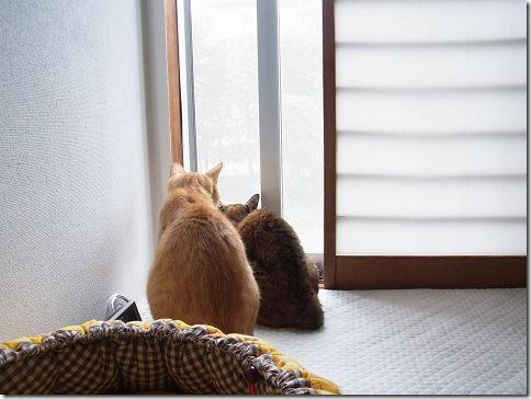 R01405800003_thumb-和んで~カレンダー2015の掲載参加受付は31日まで!