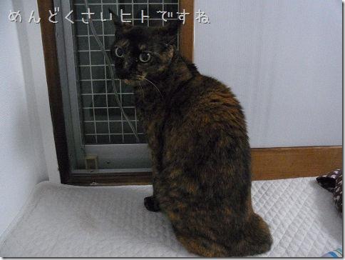 resize2054_thumb-本日の作業台/おさる