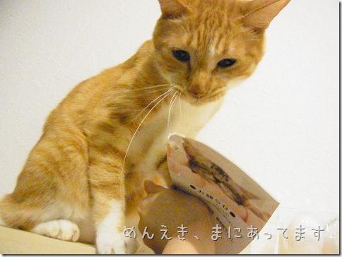R01430200005_thumb-ことわる★