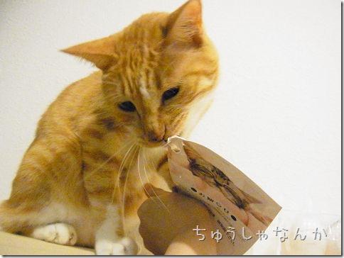 R01430220004_thumb-ことわる★
