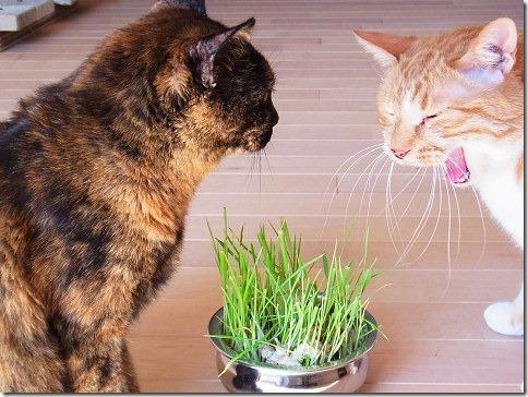R01776450011_thumb-すきすき草がすき