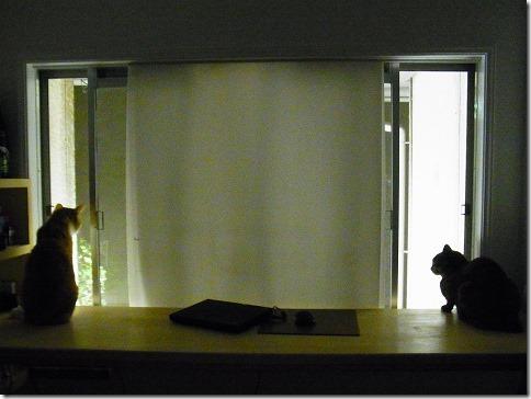 R01978520001_thumb-ピンクな夕暮れと茶色い警備隊