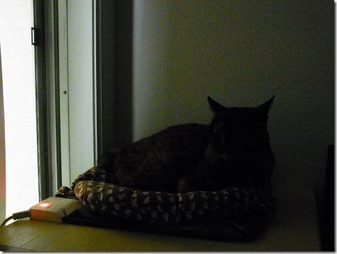 R01979090001_thumb-ピンクな夕暮れと茶色い警備隊