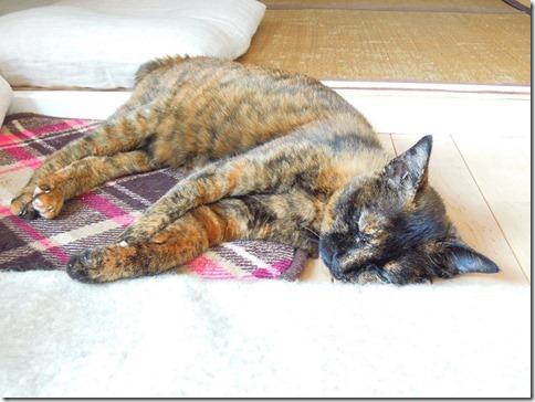 DSCN26470001_thumb-猫の家webショップでイベントでした。