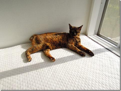wDSCN29520001_thumb-猫の家webショップでイベントでした。