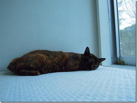 wDSCN29930001_thumb-猫の家webショップでイベントでした。