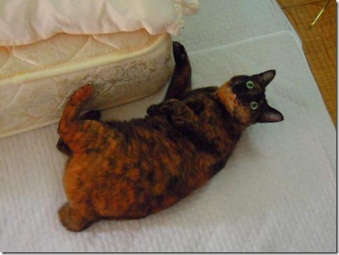 DSCN39000001_thumb-ちよだ猫まつり、ありがとうございました!