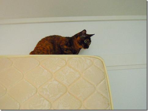 DSCN39190001_thumb-ちよだ猫まつり、ありがとうございました!
