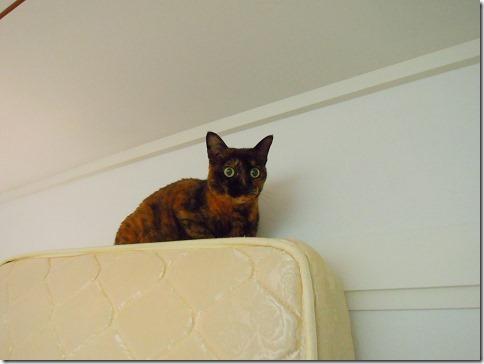 DSCN39300001_thumb-ちよだ猫まつり、ありがとうございました!