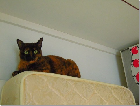DSCN39320001_thumb-ちよだ猫まつり、ありがとうございました!