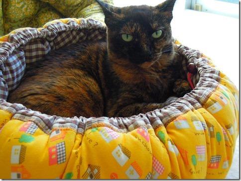 reDSCN05540001_thumb-ちよだ猫まつりに出店しますー。