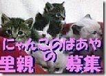 hoikuenbana_20081202000258344444443-入荷でした。