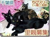 f3a4911e35bf3929b8b22ab00b0a386836352-6-愛玩動物飼養管理士認定★