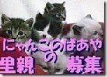 hoikuenbana_200812020002583444444434-2-ちよだニャンとなる会グッズ販売中★