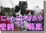 hoikuenbana_2008120200025834444444342-1-ネムネムでアマアマ