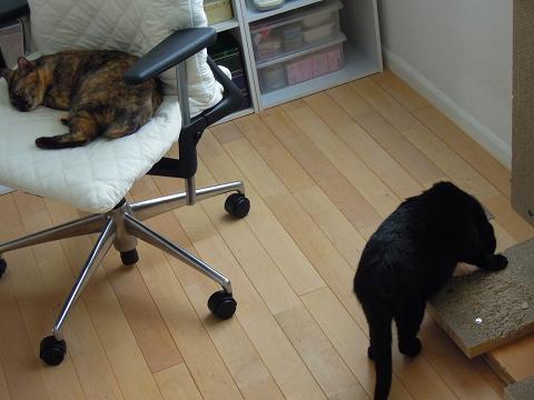 sDSCN93850002-猫の家★GW期間中の出荷・配送について
