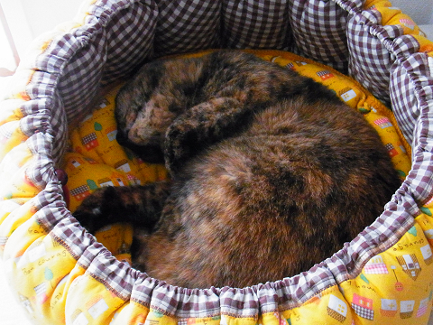R01890790001-猫の家の商標について