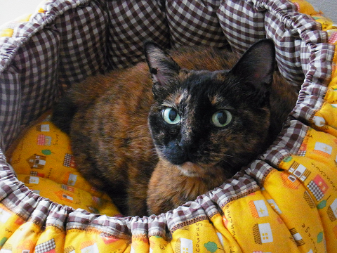 R01892790001-猫の家の商標について