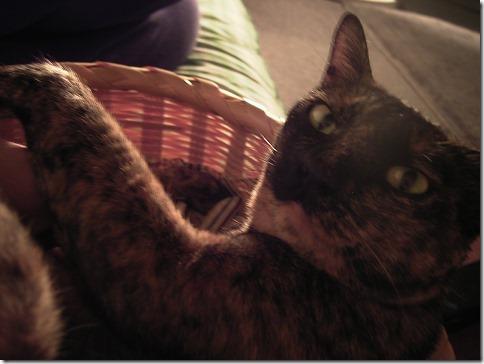 R00428820002_thumb-おかげさまで猫の家開店10周年を迎えました。