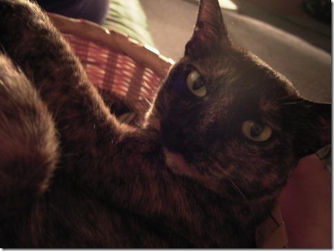R00428880001_thumb-おかげさまで猫の家開店10周年を迎えました。