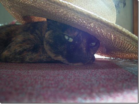 R00435990001_thumb-おかげさまで猫の家開店10周年を迎えました。
