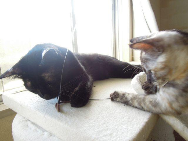 resize0201-640x480-7月23日~10時頃配信★猫の家メルマガ