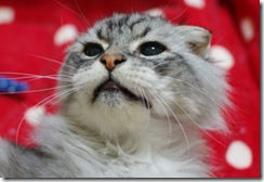 20120116133244843_thumb-猫柄にキルティングされた中綿ジャケット、