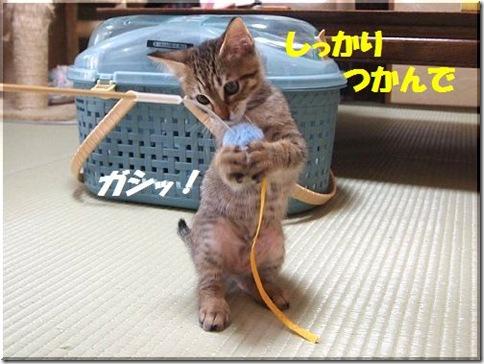 2012062306_thumb-新作ご紹介 その2