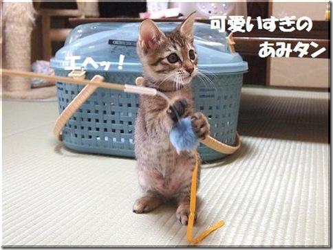 2012062308_thumb-新作ご紹介 その2