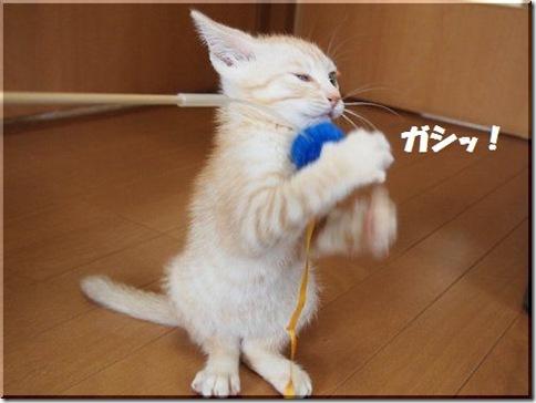 2012062408_thumb-新作ご紹介 その2