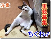 E381A1E3818FE3828Fe6d86_thumb-カラやんとか猫ベッドとか、