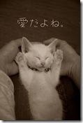 IMG_2237__thumb-本日のup!
