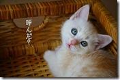 IMG_2762__thumb-本日のup!