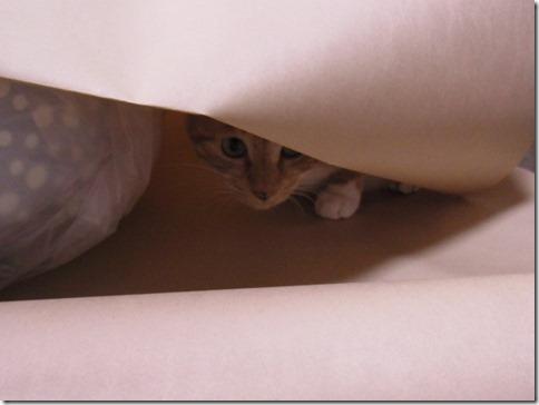 R0010290_thumb-カラやんとか猫ベッドとか、