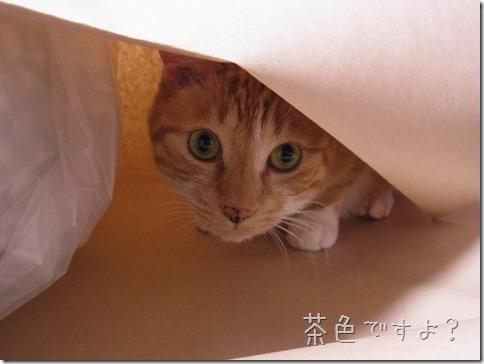 R0010291_thumb-カラやんとか猫ベッドとか、