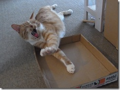 R0010743_thumb-猫柄折りたたみ傘入荷。