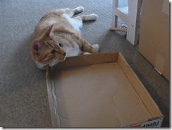 R0010747_thumb-猫柄折りたたみ傘入荷。