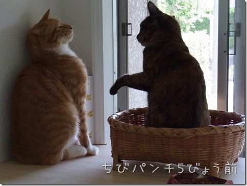 R0010940_thumb-新生活?