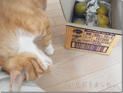 R0013203_thumb-今年も梨磨き職人。