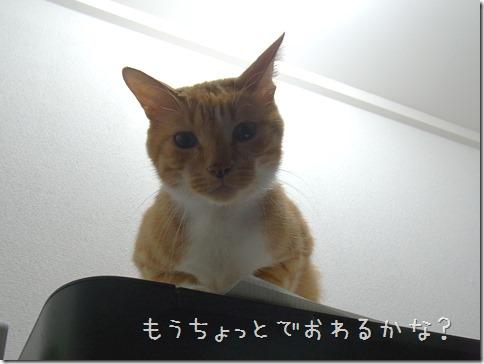 R0013729_thumb-まめぽん&にっぷ棒