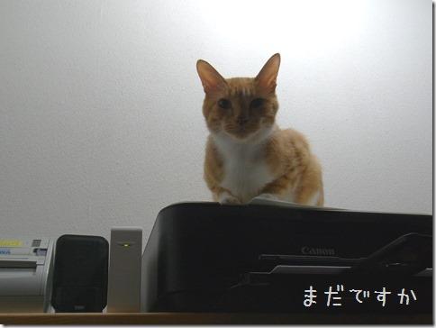 R0013733_thumb-まめぽん&にっぷ棒